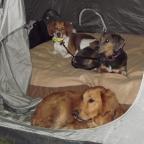 TBT: Molino Basin Camp & Hike