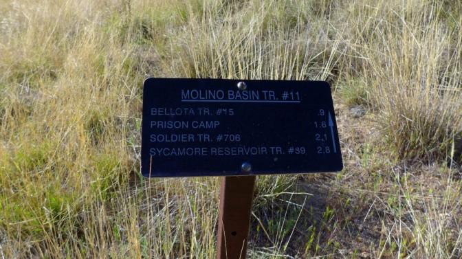 molino basin trail #11