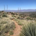 Oracle Ridge